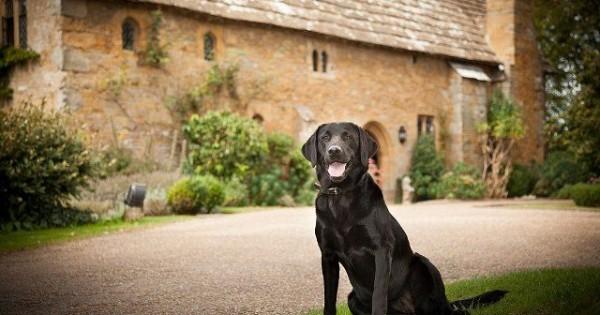 Διακοπές στο Ηνωμένο Βασίλειο μαζί με το σκύλο (Φωτογραφίες)