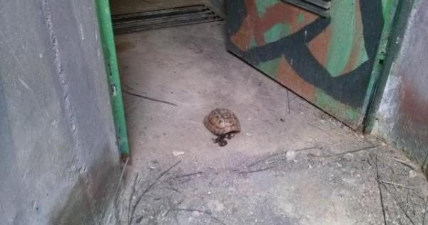Παγίδες θανάτου για τα άγρια ζώα τα ανοιχτά πολυβολεία (Φωτογραφίες)