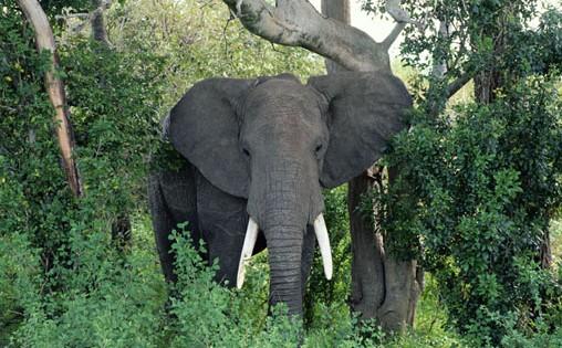 Άγρια ζώα… μεθούν στη ζούγκλα (Βίντεο)