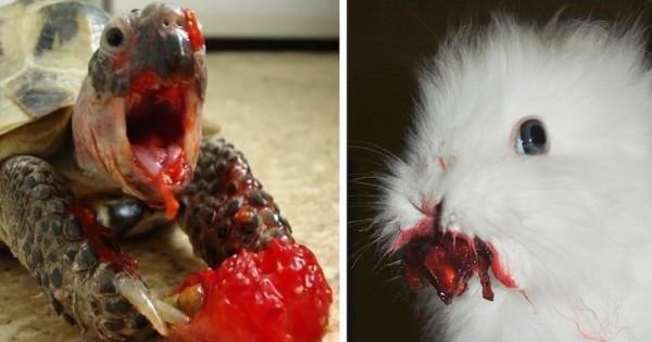 20 εκπληκτικές φωτογραφίες ζώων που τρώνε μούρα και δείχνουν σαν τέρατα που πρωταγωνιστούν σε ταινίες θρίλερ (Φωτογραφίες)