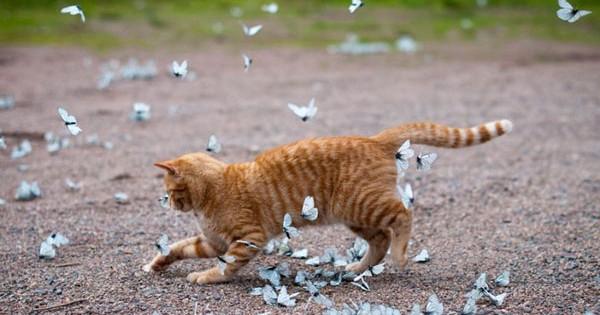 Ζώα παίζουν με πεταλούδες! (Εικόνες)