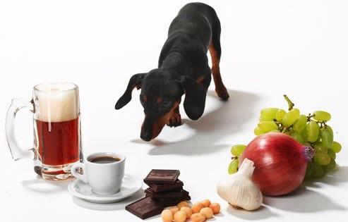 Οι πιο επικίνδυνες τροφές για τα σκυλιά!