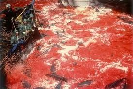 Απαγόρευση στη βάρβαρη σφαγή δελφινιών στην Ιαπωνία