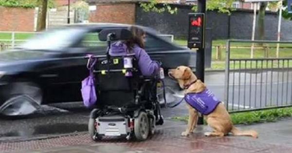 Όλοι γνωρίζουμε πως η «επικοινωνία» σκύλων κι ανθρώπων είναι κάτι το αξιοθαύμαστο (Βίντεο)