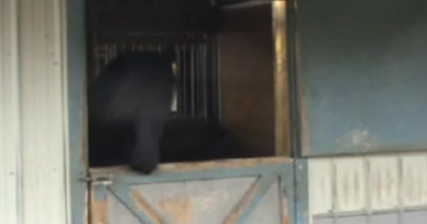 Δεν μπορούσαν να καταλάβουν πως εξαφανίζονται τα άλογα και τοποθέτησαν κάμερα. Αυτό που διαπίστωσαν, τους…