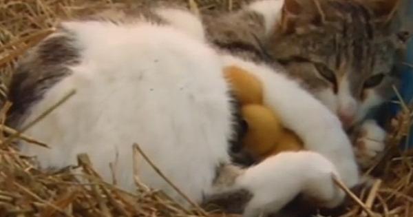 Οι ιδιοκτήτες αυτής της γάτας πάθανε σοκ όταν μάθανε τι τους έκρυβε τόσο καιρό…