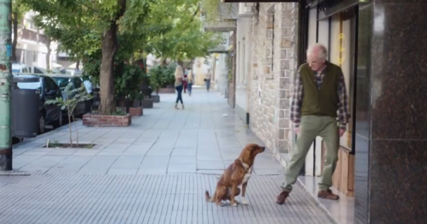 ΣΥΓΚΛΟΝΙΣΤΙΚΟ ΒΙΝΤΕΟ: Ο σκύλος μύρισε την καρδιά του αφεντικού του σε ξένο σώμα