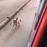 Ο άνθρωπος και ο Σκύλος: μια υπέροχη διαφήμιση από την Αργεντινή (Βίντεο)