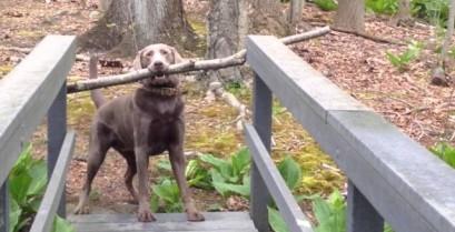 Ο σκύλος έλυσε το πρόβλημα (Βίντεο)