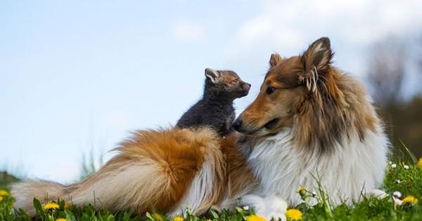Σκυλίτσα υιοθετεί ορφανή αλεπουδίτσα! (Εικόνες)