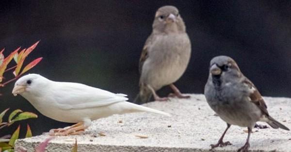 Το πιο μοναχικό πουλί στον κόσμο (Εικόνες)
