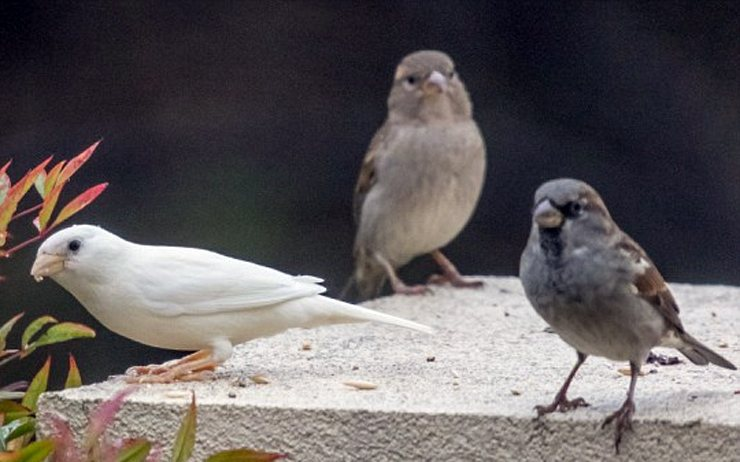 πουλί