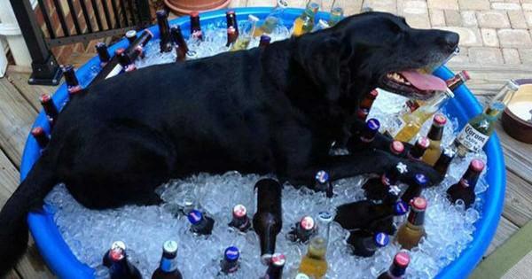 Αυτά τα 9 σκυλιά ξέρουν καλά πώς να αντιμετωπίσουν τη ζέστη του καλοκαιριού! (Εικόνες)