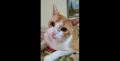 Τραγουδώντας παρέα με ένα γάτο (Βίντεο)