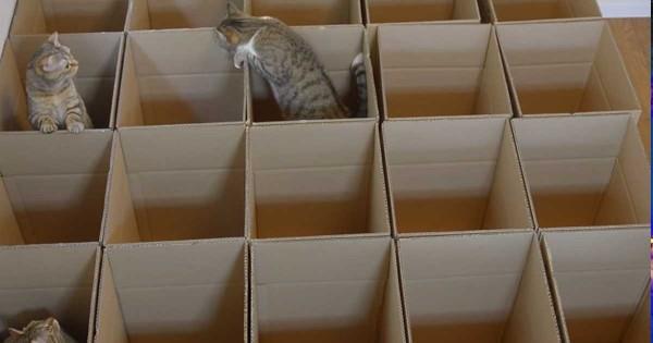 Έφτιαξαν έναν λαβύρινθο από χαρτόκουτα και έβαλαν μέσα τις γάτες τους! Το παιχνίδι που έκαναν; Aπολαυστικό! (Βίντεο)