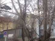 Kοράκι – Γάτα: Σημειώσατε 1 (video)