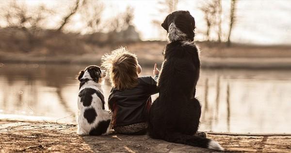 Τρυφερές φωτογραφίες της σχέση αγάπης ενός 2χρονου με τα 3 σκυλιά του!