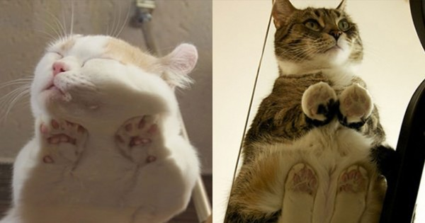 17 φωτογραφίες από γάτες που κάθονται πάνω σε γυαλί (Φωτογραφίες)