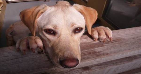 Αμαλιάδα: Πέταξαν σκύλο νεκρό στη θάλασσα (εικόνα)