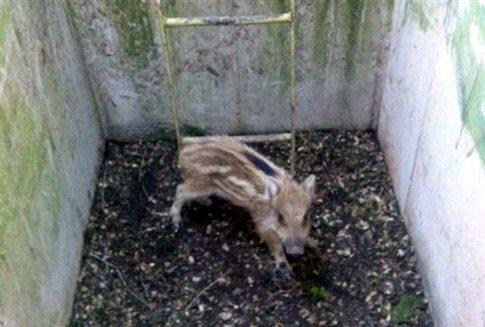 πολυβολεία παγίδα Κιλκίς θάνατος ζώα Γενικό Επιτελείο Στρατού άγρια ζώα