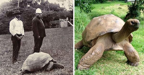 Αυτή η χελώνα είναι η πρώτη που φωτογραφήθηκε το 1902. Δείτε πως είναι 113 χρόνια μετά!