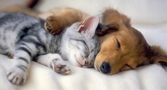 Όταν τα ζώα ονειρεύονται