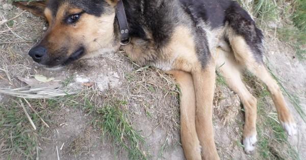 Καρποχώρι Καρδίτσας: Πυροβολημένος αλλά ζωντανός κείτονταν για μέρες στο πλάι του δρόμου