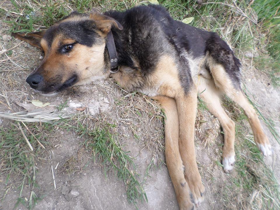 φιλόζωοι Σκύλος Καρδίτσα διάσωση