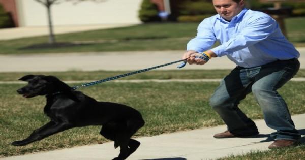 Γιατί ο σκύλος τραβάει το λουρί στην βόλτα;