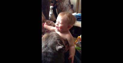 Το πίτμπουλ και το μωρό (Βίντεο)