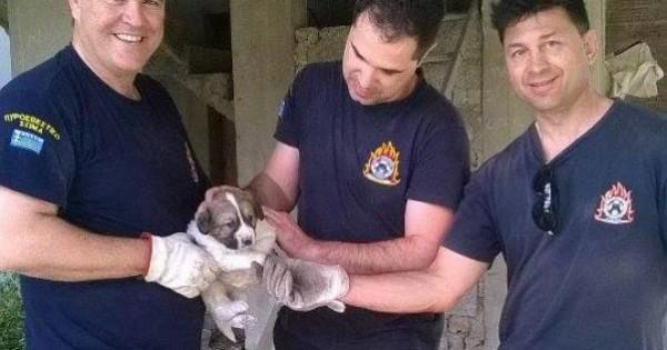 Βόλος: Οι πυροσβέστες απεγκλώβισαν το κουταβάκι από την οικοδομή