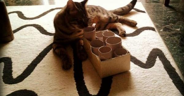 Ένα εύκολο παιχνίδι μόνο για γάτες!