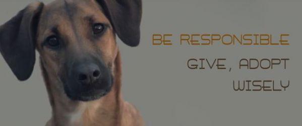 «Σκέψου καλά πριν υιοθετήσεις ένα σκυλάκι!»