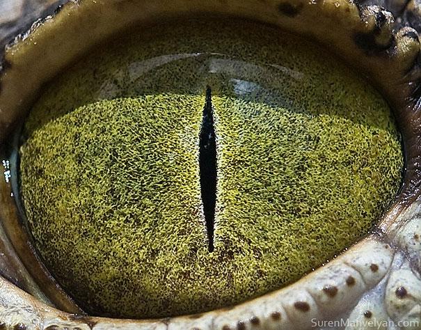 φωτογραφίες μάτια κοντινές λήψεις ζώα