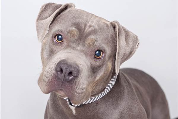 Σκύλος αυτισμός