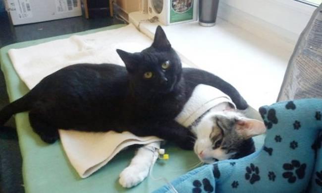 νοσοκόμος κτηνίατρος γάτος Γάτα