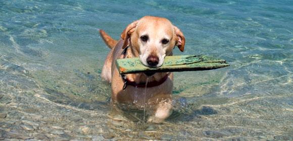 Σκύλος θαλασσινό νερό θάλασσα