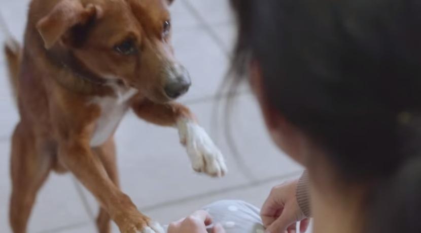 φίλος Σκύλος δωρεά οργάνων διαφήμιση