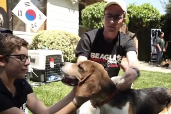 ελευθερία αιχμαλωσία Beagle Freedom Project Beagle