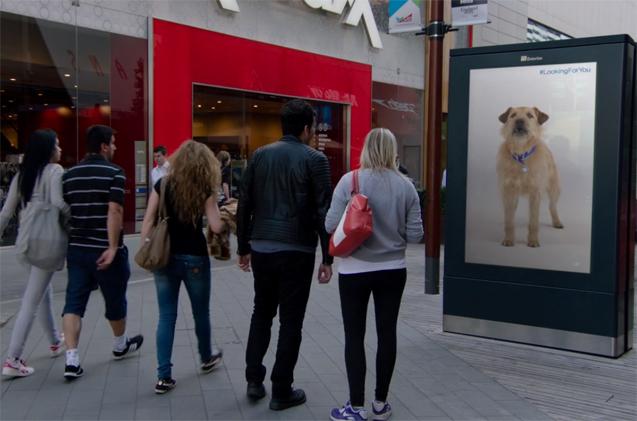 Σκύλος διαφήμιση