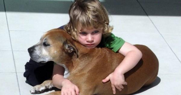 Τα 6 πιο συνηθισμένα συμπτώματα ασθένειας σε σκυλιά και γάτες