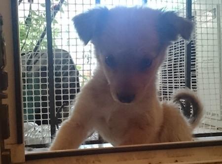 Χαρίζεται Σκύλος Περαία Θεσσαλονίκης κουτάβι Θεσσαλονίκη