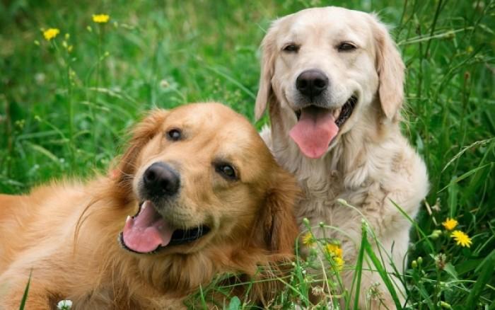φίλος Σκύλος σκύλοι μάτια αγάπη