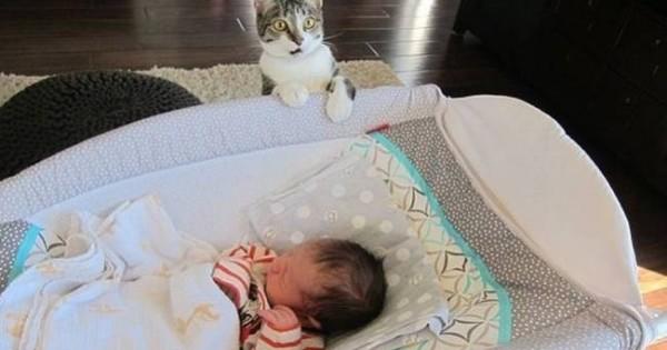 Ζευγάρι ξέχασε να πει στη γάτα του ότι περιμένει μωρό, η αντίδρασή της;