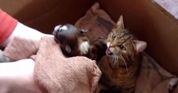Έβαλαν ένα νεογέννητο κουτάβι στο ίδιο κουτί με μια γάτα και τα γατάκια της, αυτό που έγινε είναι εκπληκτικό!