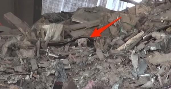 Φοβισμένο σκυλί ζούσε σε ένα βουνό από σκουπίδια μέχρι που έγινε το θαύμα…