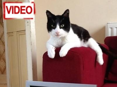 Ρεκόρ Γκίνες: Αυτός είναι ο γάτος με το πιο δυνατό νιαούρισμα!