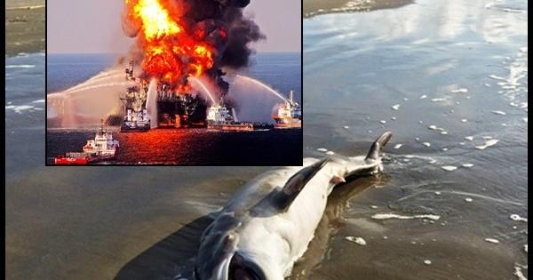 ΗΠΑ: Η πετρελαιοκηλίδα του 2010 αφάνισε τα δελφίνια