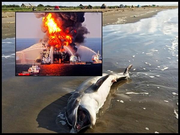 πετρελαιοκηλίδα δελφίνια δελφίνι BP
