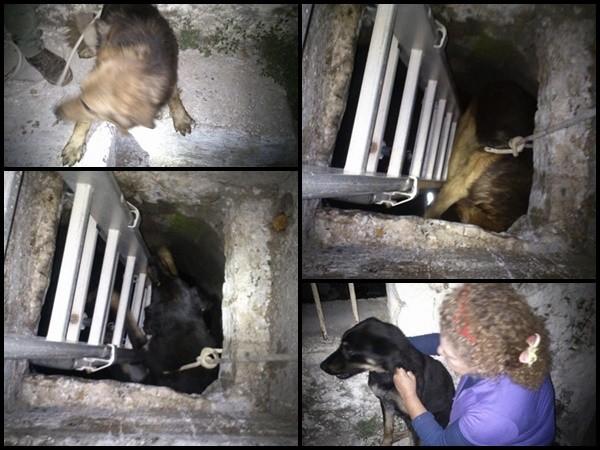 σκυλιά πηγάδι Κεφαλονιά Διλινάτα